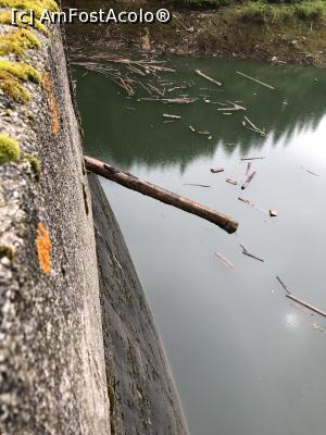 """P21 <small>[JUN-2019]</small> Acest trunchi mare de copac era infipt in preaplinul barajului Galbenu » foto by Dan&Ema  -  <span class=""""allrVoted glyphicon glyphicon-heart hidden"""" id=""""av1082727""""></span> <a class=""""m-l-10 hidden"""" id=""""sv1082727"""" onclick=""""voting_Foto_DelVot(,1082727,5423)"""" role=""""button"""">șterge vot <span class=""""glyphicon glyphicon-remove""""></span></a> <a id=""""v91082727"""" class="""" c-red""""  onclick=""""voting_Foto_SetVot(1082727)"""" role=""""button""""><span class=""""glyphicon glyphicon-heart-empty""""></span> <b>LIKE</b> = Votează poza</a> <img class=""""hidden""""  id=""""f1082727W9"""" src=""""/imagini/loader.gif"""" border=""""0"""" /><span class=""""AjErrMes hidden"""" id=""""e1082727ErM""""></span>"""